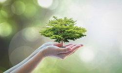 ทำความรู้จักกับแคมเปญ 'Forest Rescue'  ที่ช่วยชีวิตต้นไม้รอบกรุงและปริมณฑล