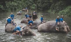วิถีแห่งควาญช้าง ณ ศูนย์อนุรักษ์ช้างไทย เรียนรู้วิถีชีวิตที่ผูกพันของคนกับช้าง
