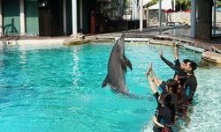 ครั้งหนึ่งในชีวิตสวมบทเป็นครูฝึกปลาโลมา @Universal Studios Singapore