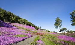 เที่ยวญี่ปุ่น ฤดูใบไม้ผลิ กับ 7 ที่เที่ยวแนะนำว่าต้องไป !