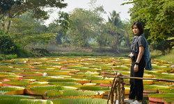 ยืนหลง(รัก) ในดงบัวยักษ์ สวนบัวอมรรัตน์ จ.พิษณุโลก