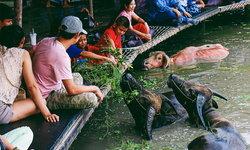 """""""กินแฟ ดูฟาย"""" กิจกรรมใหม่สุดคูล ที่หมู่บ้านอนุรักษ์ควายไทยสุพรรณบุรี"""