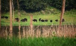 สำรวจฮาลาบาลา ผืนป่าที่สมบูรณ์ที่สุดของด้ามขวานไทย
