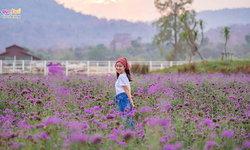 ชมทุ่งดอกเวอร์บีน่าสวยๆ  ที่เดอะเวโรน่า ทับลาน ปราจีนบุรี