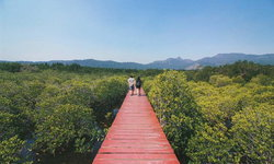 เกาะช้าง 3 วัน 2 คืน  ลุยเที่ยวจัดเต็ม ดำน้ำ เดินป่า ตามหาความงดงามสุดแผ่นดินตะวันออก
