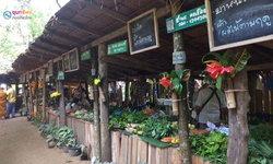 ตลาดใต้โหนด ตลาดนัดชุมชนสีเขียว สะท้อนวิถีชีวิตคนพัทลุง