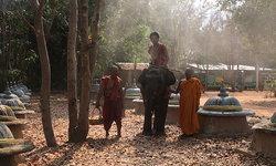 เรียนรู้วิถีชีวิตตำนานช้าง ที่สุสานช้างวัดป่าอาเจียง สุรินทร์