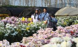 ทุ่งดอกเบญมาศกว่า 40 ไร่ บานสะพรั่งรับเดือนแห่งความรักที่วังน้ำเขียว