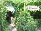 สวนผักน้ำ