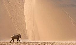 Thorsten Milse ช่างภาพสัตว์ป่า และธรรมชาติ