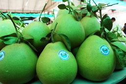 2 เทศกาลงานส้มโอชื่อดัง นักชิม ชักชอป ไม่ควรพลาด