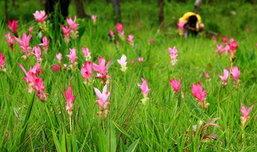 ส่งท้ายหน้าฝนเดินชมป่าเขียว และดอกไม้สวยที่ อช.ไทรทอง