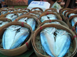 ขอเชิญร่วมงาน เทศกาลกินปลาทูและของดีเมืองแม่กลอง