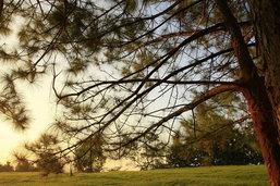 เดินป่า นอนนับดาว สัมผัสลมหนาว  ทุ่งโนนสน อช.ทุ่งแสลงหลวง จ. พิษณุโลก