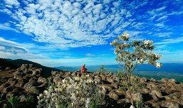 ภูหินร่องกล้า สมรภูมิประวัติศาสตร์และธรรมชาติที่แสนอัศจรรย์