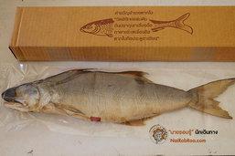 ปลากุเลาตากใบ ราชาแห่งปลาเค็ม
