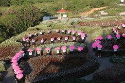 ดอกไม้บานสะพรั่ง ฟลอร่า พาร์ค 2014
