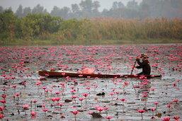 เที่ยวทะเลบัวแดง จังหวัดอุดรธานี สวรรค์ของคนรักษ์ธรรมชาติ