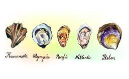 6 ข้อเท็จจริง ที่คนชอบทานหอยนางรมต้องอ่าน!