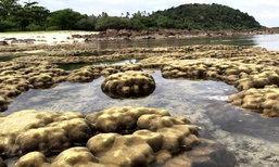 สุดแปลก! ปรากฏการณ์ธรรมชาติที่เกาะทะลุ น้ำทะเลลด จนปะการังโผล่พ้นน้ำ