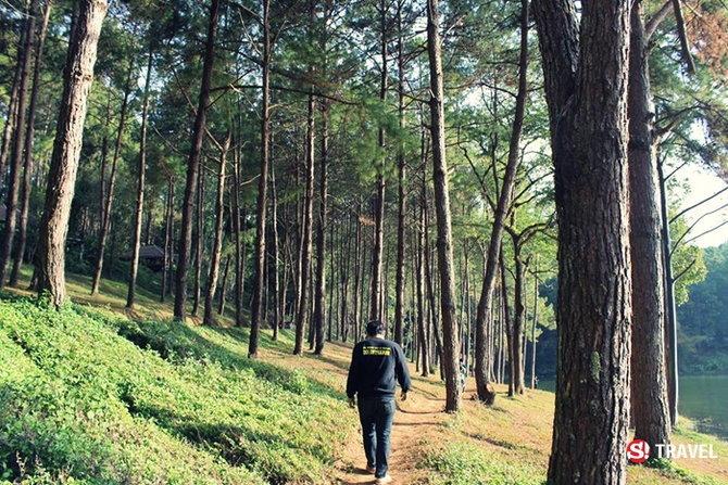 ป่าสน ปางอุ๋ง