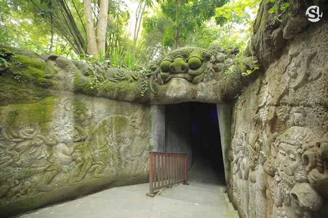 monkeyforest(2)