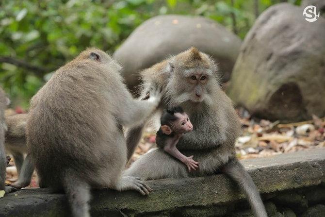 monkeyforest(4)