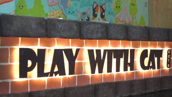 playwithcatcafe13