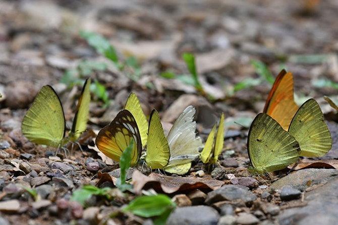 11.butterfly-3