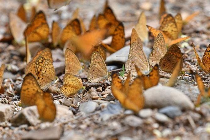 2.butterfly-2