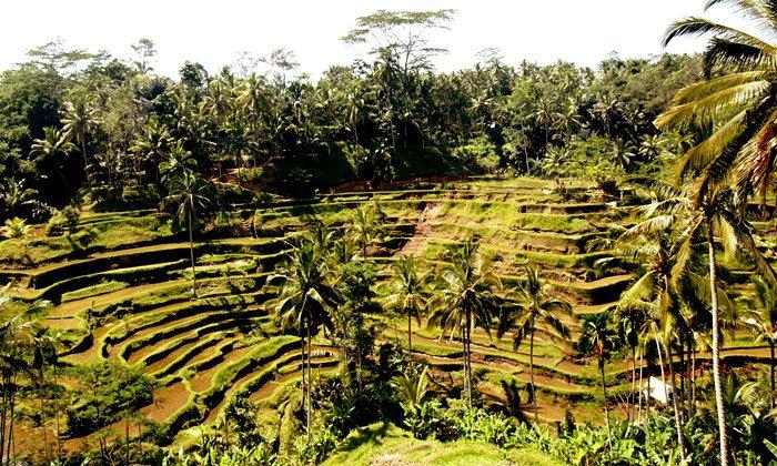 """พาชม! นาขั้นบันไดที่ บาหลี """"Tegalalang rice terrace view"""""""