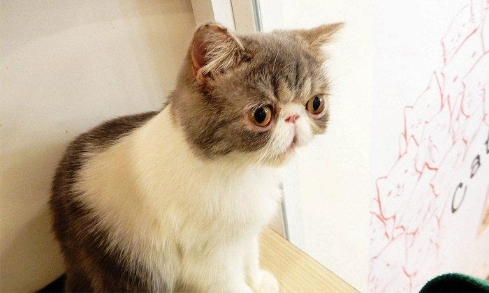 'เมี้ยวๆ' ไปนั่งเล่นเพลินๆ ในวันว่างๆ ที่ Cat up cafe คาเฟ่แมวย่านสีลมกัน
