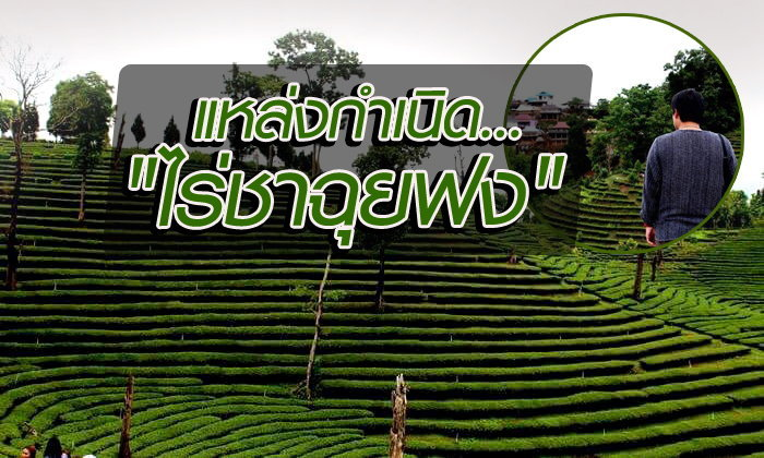 พาชมแหล่งกำเนิดไร่ชาฉุยฟง แหล่งผลิตชาอันดับหนึ่งของไทย !!