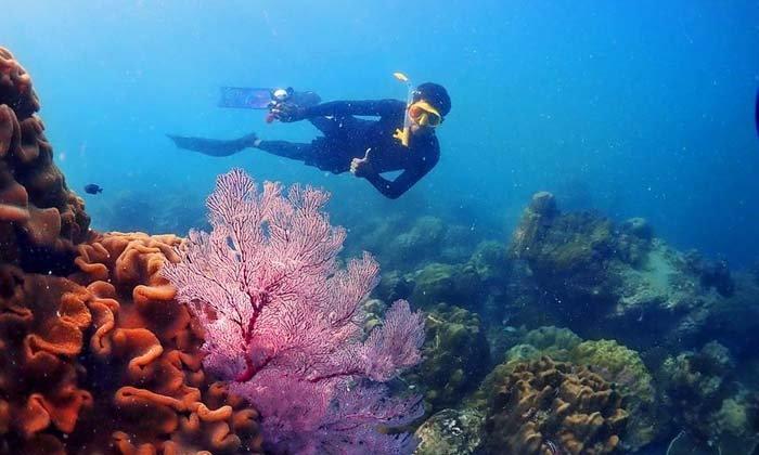 โลกใต้ทะเลอ่าวแสมสาร แนวปะการังสุดอลังการที่อยู่ใกล้กรุงเทพแค่เอื้อม