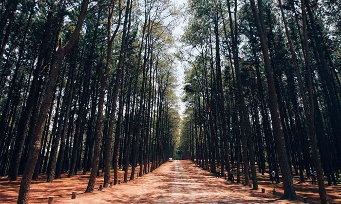 สวนสนบ่อแก้ว ที่เที่ยวสุดคูลท่ามกลางไอหมอกแห่งเมืองเชียงใหม่