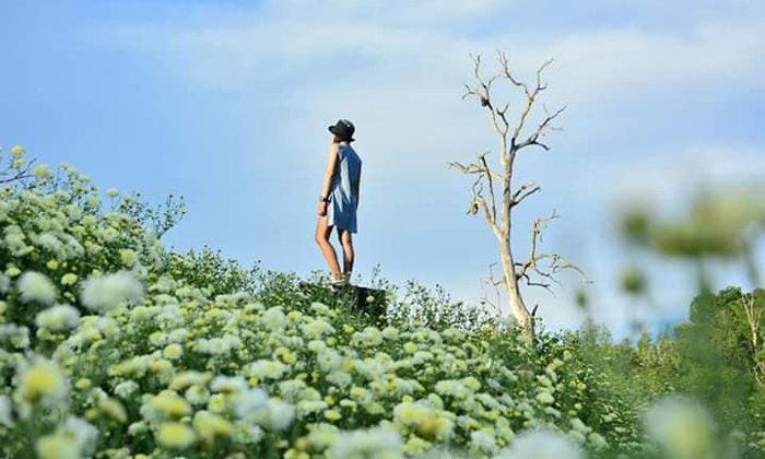 ทุ่งดอกเก๊กฮวยสะเมิงบานแล้ว! จุดเช็กอินถ่ายรูปสุดเก๋แห่งเชียงใหม่