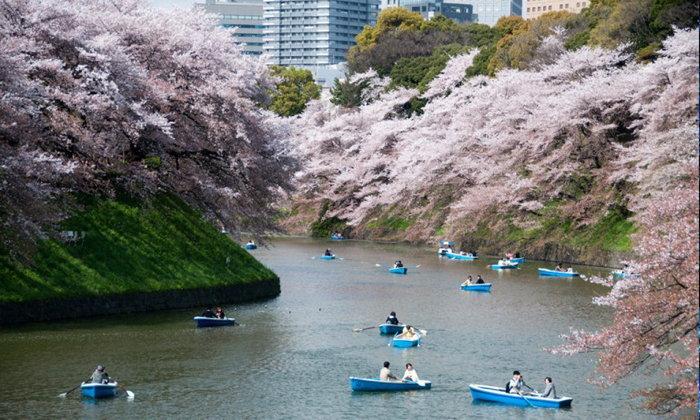 10 จุดชมซากุระ โตเกียว ที่สวยที่สุด ไปทั้งทีไม่มีผิดหวัง !
