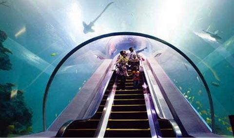 """""""สวรรค์แห่งโลกใต้ทะเล"""" ที่บึงฉวาก สุพรรณบุรี"""