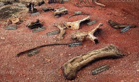 ตะลุยป่าภูเวียง...ตามรอยเผ่าพันธุ์ไดโนเสาร์