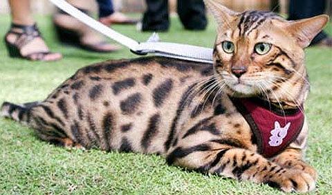 มหกรรมสัตว์เลี้ยงแห่งประเทศไทย ครั้งที่ 10