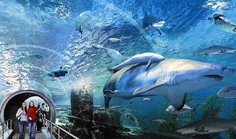 สยาม โอเชี่ยน เวิร์ล Siam Ocean World