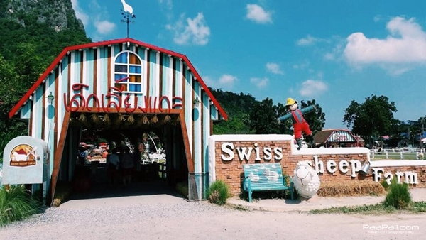 Swiss Sheep Farm กลับมากี่ครั้งก็ไม่เบื่อ!!