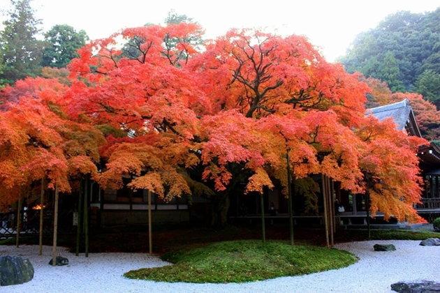 """5 แหล่งชม """"ใบไม้เปลี่ยนสี"""" ในฟุกุโอกะ!"""