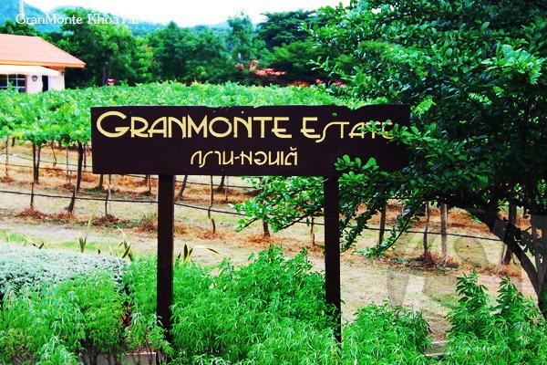 เปิดไร่องุ่นกรานต์มอนเต้ (Granmonte') กับ นิคกี้-วิสุตา โลหิตนาวี