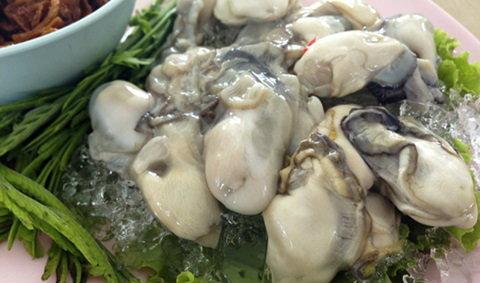 เทศกาลกินหอย ดูนก ตกหมึก ประจำปี 2556