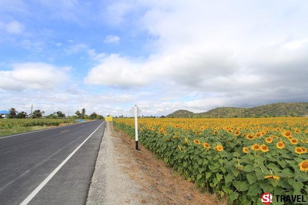 11 ทุ่งดอกไม้..เมืองไทย ที่สวยไม่แพ้ชาติใดในโลก