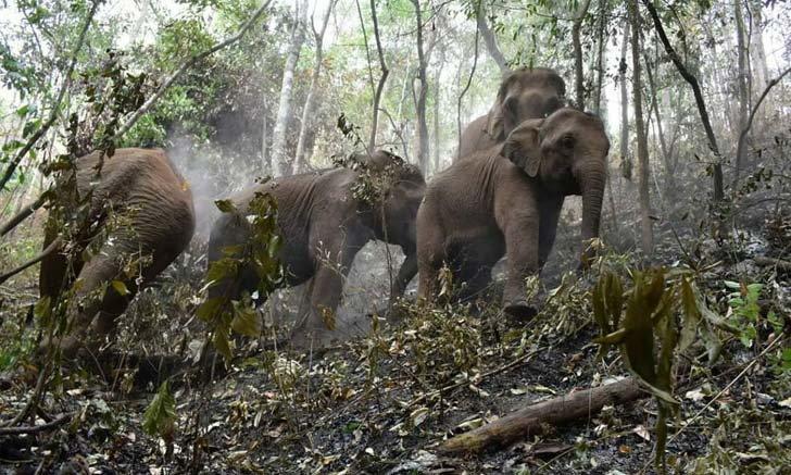 เผยภาพสะเทือนใจไฟป่าทำลายแหล่งที่อยู่ช้างที่แม่แจ่ม