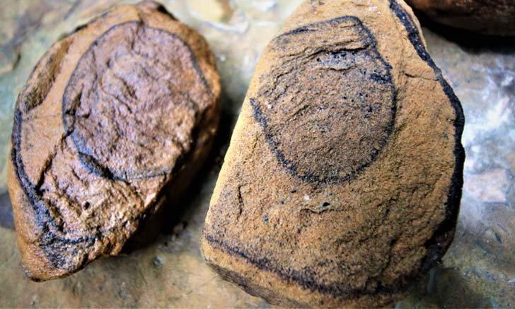 ฮือฮาพบฟอสซิลหอยน้ำเค็มในลำธารอายุไม่ต่ำกว่า 270-290 ล้านปี