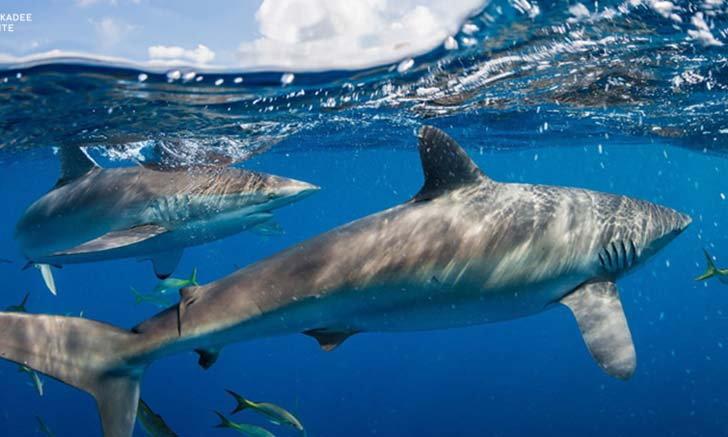 Virtual Ocean Adventures ด่ำดิ่งสู่โลกใต้ทะเลทั่วโลกแบบเสมือนจริงจากที่บ้าน