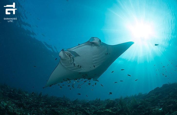 virtual-diving-5